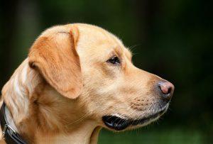 dog-1194083__340
